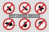 pest control images.png