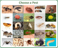 choose-a-pest.jpg