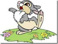 sunny bunny.jpg