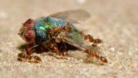 Bad Bugs Melbourne