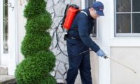 AFFORDABLE PEST TREATMENT PERTH.jpg