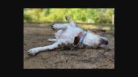 Dead Dog Removal Melbourne