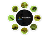 Pest-Control-Wavell-Heights.png
