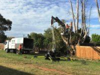 Annual Tree Maintenance.jpg